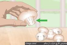 تشخیص قارچ خراب از سالم