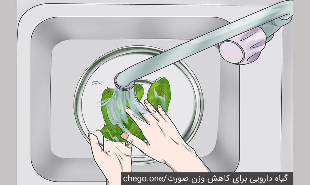 گیاه گواوا