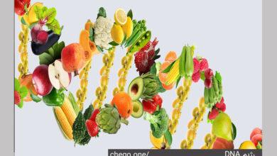 Photo of رژیم غذایی DNA چیست و چگونه موجب لاغری میشود؟